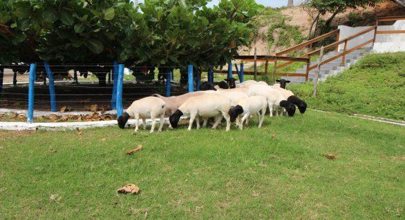 Telão no Parque da Pecuária irá acompanhar Leilão Digital Pé na Areia