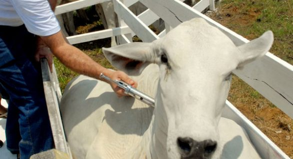 CPLA alerta produtores para prazo da vacinação contra aftosa