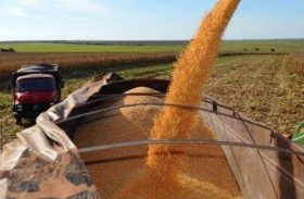 Colheita do milho pode ser afetada por instabilidades