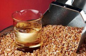 Produção de etanol deve aumentar consumo de milho
