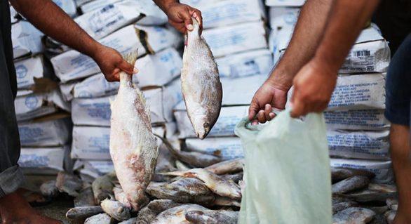 MP de AL investiga fraude na aquisição de peixes em Santana do Ipanema