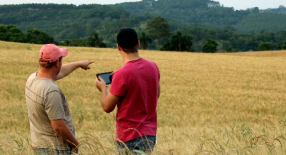 Internet das coisas chega à agricultura e deve investir R$ 100 milhões em 2019