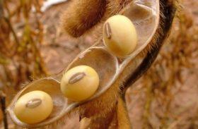 Demanda em alta mantém preço do farelo de soja firme