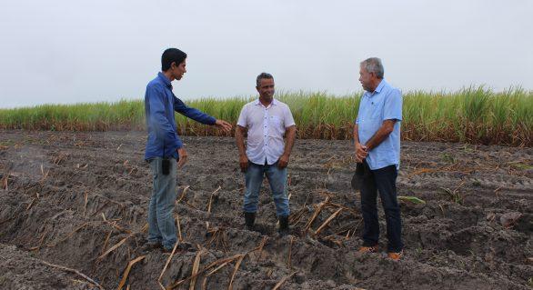 Plantio de inverno na Pindorama deve alcançar 2300 hectares
