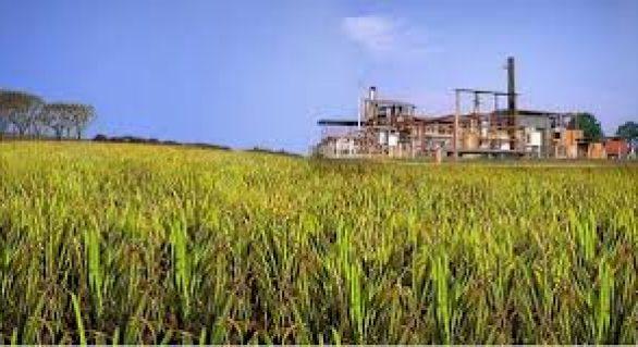 Faeal acredita que setor sucroenergético tem oportunidade de sair da crise