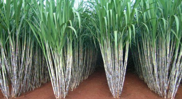 Asplana participa do 35º Simpósio da Agroindústria da Cana