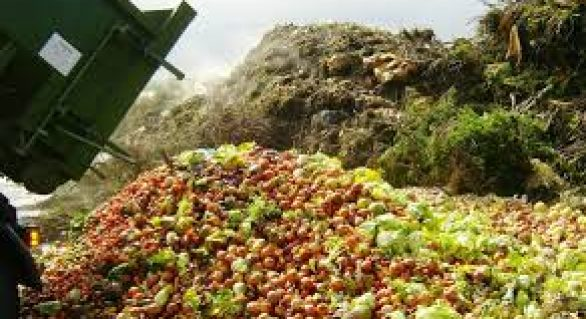 Embrapa e parceiros iniciam a implementação da estratégia de combate ao desperdício de alimentos no país