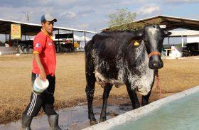 36ª Expo Bacia Leiteira levou 30 mil pessoas ao Parque Mair Amaral, em Batalha