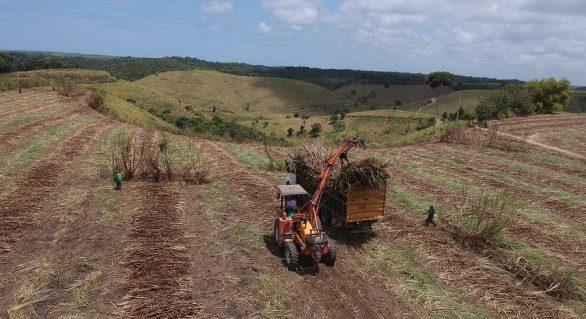 Safra de cana de Alagoas terá crescimento de mais de 16%
