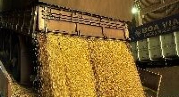 Preço da soja volta a cair no Brasil
