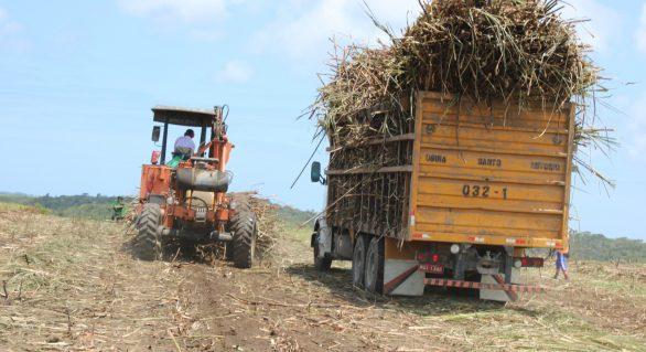 Usinas já produziram mais de 126 mil toneladas de açúcar na safra 18/19