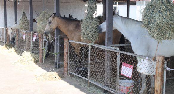Leilões de animais já movimentaram mais de R$ 4 milhões na Expoagro