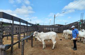 Primeiros animais chegam ao Parque da Pecuária