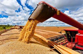 Alagoas deve ampliar a cultura de grãos em 2019