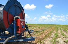 Cooperativa aposta em irrigação para aumentar a produtividade