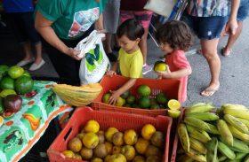 Olho D`Água do Casado ganha unidades produtivas da agricultura familiar