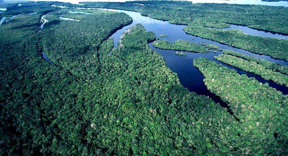 Pesquisa de conservação da Amazônia ganha prêmio nacional
