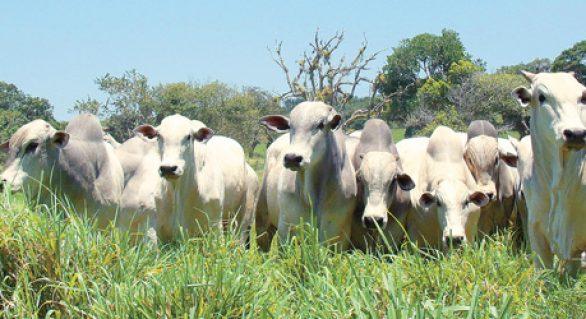Mais Pasto realiza ações no interior do Estado na próxima semana