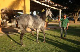 3º Leilão Vale Rico apresenta tropa nesta sexta (7)