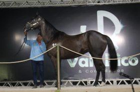 3º Leilão Vale Rico fatura R$ 6,3 mi e bate o recorde do ano