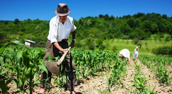 Prefeitura de Arapiraca paga primeiro lote de dívidas de agricultores junto ao BNB