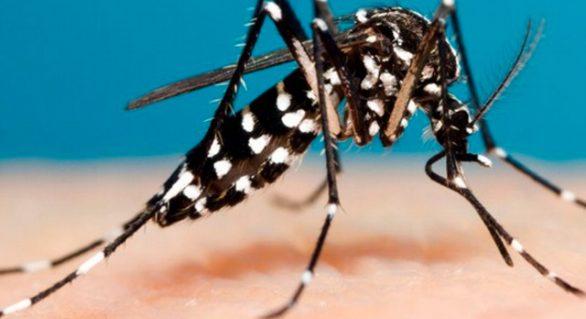 Bauru registra 6 mil casos de dengue em 2019