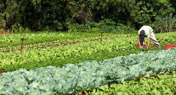 Mais de 27 mil agricultores se cadastraram no Garantia-Safra