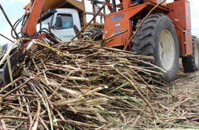 Expectativa de moagem na safra 18/19 cresce para 16,3 mil de toneladas de cana processadas