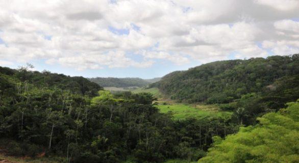 AL é o 2º estado que menos desmata Mata Atlântica no País