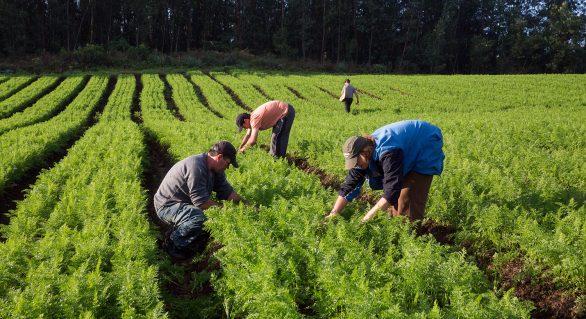 Entidades denunciam o descaso de políticas na agricultura familiar
