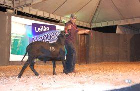 Ovinos: Leilão Alagoas abre pré-lance