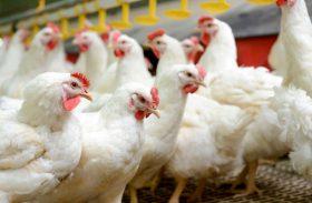 OMC abre painel sobre importações para Indonésia