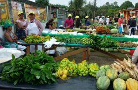 Fetag/AL vai realizar 1ª Feira da Agricultura em Maceió
