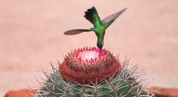 IMA/AL abre inscrições para o IV Concurso de Fotografia Ambiental