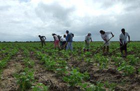 Fetag/AL alerta que distribuição de sementes fora de época prejudica produtores