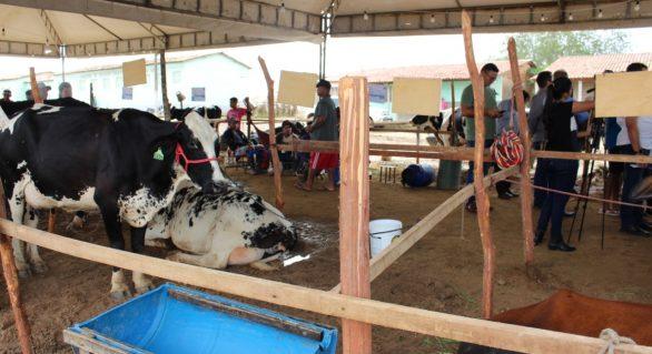 Torneio Leiteiro de Pau Ferro valoriza agricultura familiar