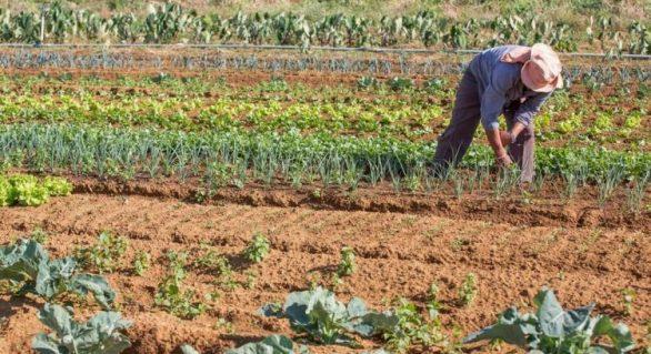 Nordeste é a 3° região que mais gerou empregos no setor agropecuário