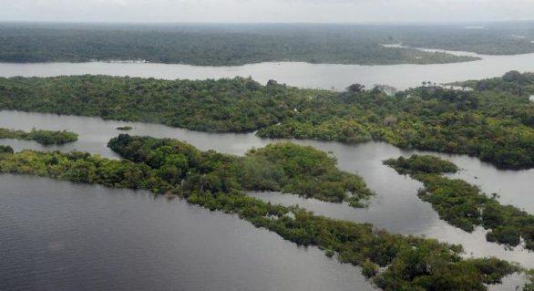 Edital para contratar empresas que monitorem desmatamento é lançado pelo Ibama