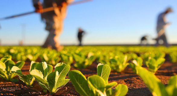 CRA visa alteração do cálculo de preços de produtos agrícolas