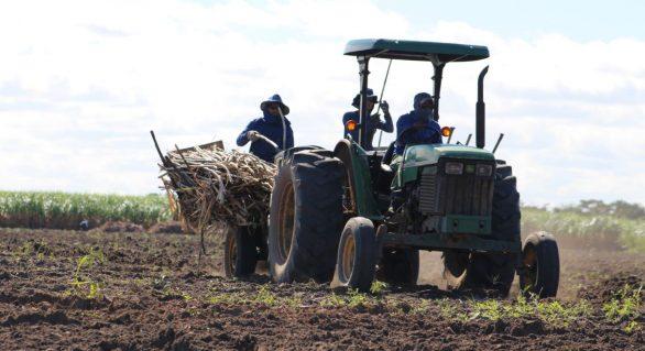 Plantadeiras reduzem custos de produção da cana