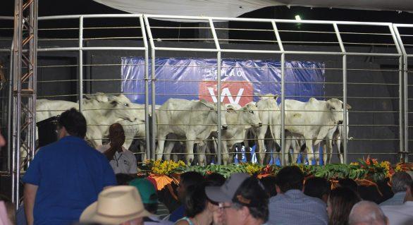 Expoagro/AL é a principal praça de comercialização animal do Norte e Nordeste