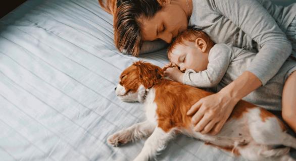 É melhor dormir ao lado de um cachorro do que de um homem, aponta estudo