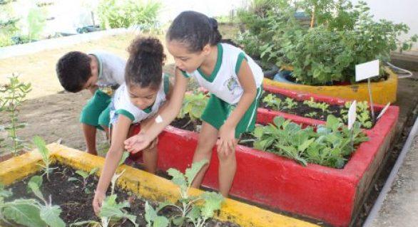 Horta escolar muda hábito alimentar de alunos da rede pública