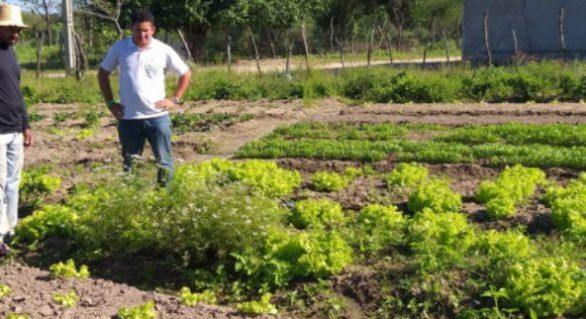 Assistência técnica garante diversificação de culturas aos produtores do Canal do Sertão
