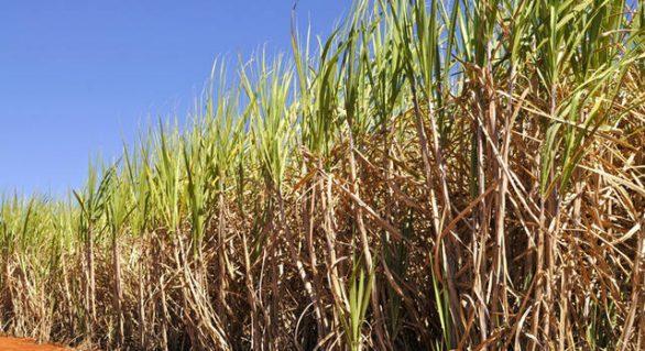 R$16,5 bilhões foram contratados em crédito rural no mês de julho