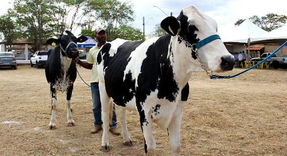 Expo Bacia: Expectativa é participação de 500 animais