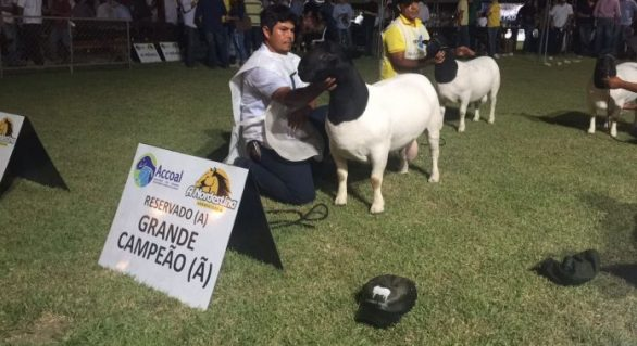 Exposição Nacional de ovinos vai movimentar 69ª Expoagro/AL