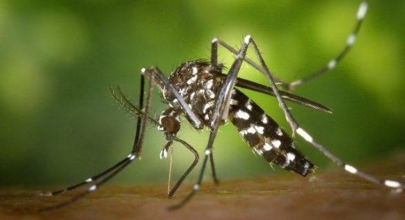 Em Alagoas, número de casos de dengue sobe 981%