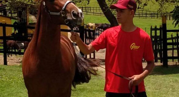 Alagoas Quarter Horse lançará garanhão de genética importada dos EUA
