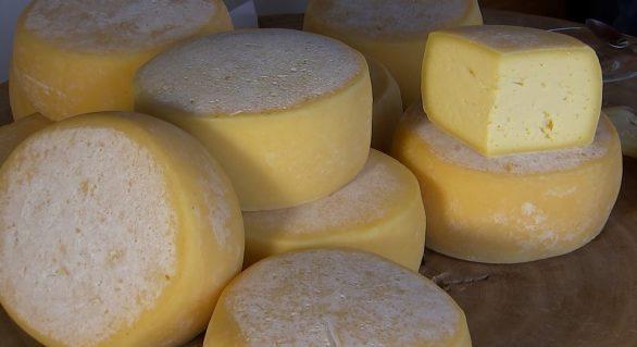 Assembleia debate regulamentação de produtos artesanais lácteos